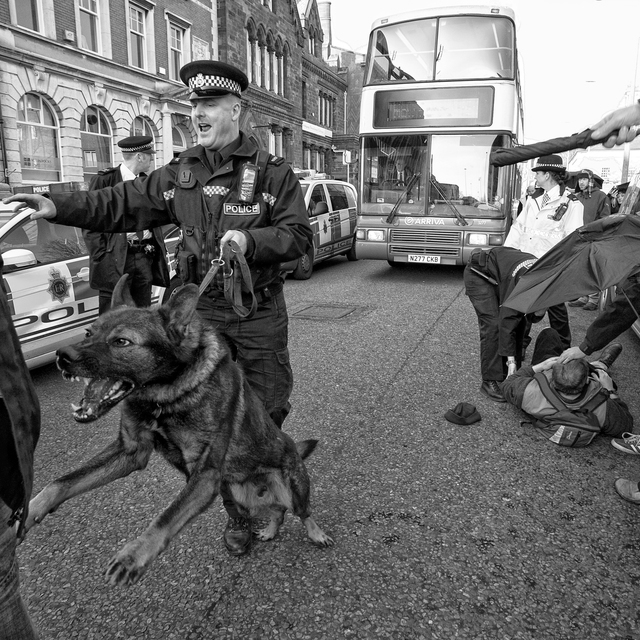 Picfair 02000160 police dog fu preview only